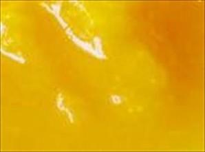 タカ食品 | 【国産】 マンゴーピューレ P023 (桜シリーズ) 【冷凍ピューレ】 / 1kgトレー