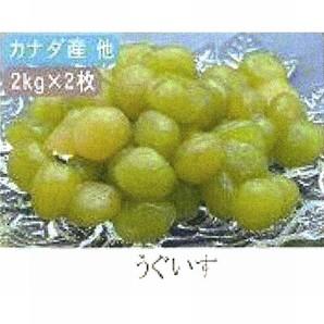 田中製餡 | かのこ豆 うぐいす / 2kg×2袋